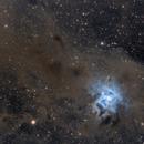 NGC7023 Iris Nebula dust full field,                                Jocelyn Podmilsak