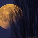 Lunar Eclipse 21 Jan 2019 - just before moonset,                                Antonio Soffici
