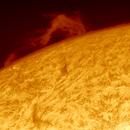 2013-05-01 @ 13-01-45gmt: The Sun in Ha -> Large Quiescent Prominence on NE limb,                                Fernando