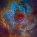 The Rosette Nebula - Hubble Palette Tone Map,                                Eric Coles (coles44)