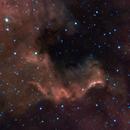 NGC 7000, the North America Nebula,                                Evelyn Decker