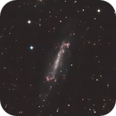 NGC 4236 - Caldwell 3 in Dra as HaRGB,                                Benny Colyn