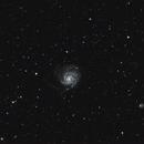 M101 the Pinwheel galaxy,                                Steve Coates