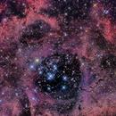 Rosette Nebula NGC2244,                                Paul Evans