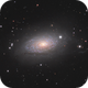 Messier 63 the Sunflower Galaxy,                                Dave Boddington