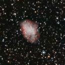 M1,                                pterodattilo