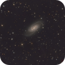 Ngc 2903_LRGB_Crop,                                Manfred Hraba