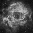 Caldwell 49 - The Rosette Nebula,                                Victor Greene