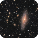 The Deer Lick Galaxy Group,                                Gabe Shaughnessy