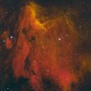 Pelican Nebula,                                Dan Bryan
