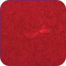 Ar12752 -- 11-17-19,                                Seldom