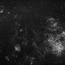 Tarantula Nebula in H-a - Full Field,                                Bob Gillette
