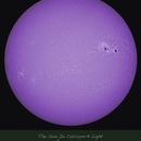 The Sun In Calcium-K Light, June 24, 2015,                                wjlee