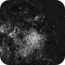TARANTULA NEBULA (NGC 2070)  in H ALPHA,                                JAIME FELIPE RAMIREZ NARVAEZ
