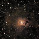 Iris Nebula with NGC7023,                                Bill Leonard