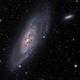 M106 and NGC4217,                                Paul MacAree