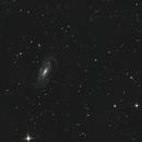 NGC 5033 Waterbug Galaxy,                                Pekka Sunila