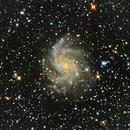 NGC 6946 - Fireworks Galaxy w/SN 2017 eaw,                                Doug_Bock