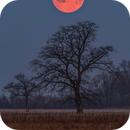 Sunset of the moon in March,                                Łukasz Żak
