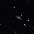 NGC3953,                                Armel FAUVEAU