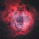 The Rosette Nebula - NGC2244,                                Henrique Silva