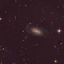 NGC 2903,                                Darien Perla