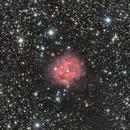 IC5146 (The Cocoon nebula),                                ParyshevDenis