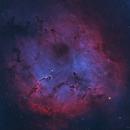 IC 1396 Elephant Trunk Nebula,                                John Travis