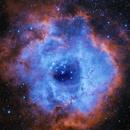 DSLR Hubble Palette NGC 2237,                                Alan Taylor