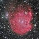 NGC 2174,                                Frank Colosimo