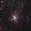 Tarantula Nebula,                                Leslie Rose