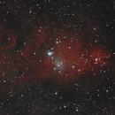NGC 2264 - Christmas Tree Cluster - Cone Nebula - Fox Fur Nebula,                                Carl Newberg