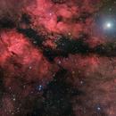 IC 1318 (Gamma Cygni Nebula),                                Miles Zhou