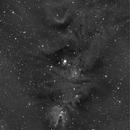 NGC 2264, christmas tree cluster, fox fur nebula and cone nebula in Halpha,                                Arne Krack