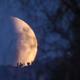 Lunar Eclipse Moonrise (2015-09-27),                                evan9162