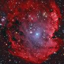 NGC 2174,                                Dean Salman