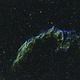 Grand dentelle du Cygne,                                Walliang Jacques