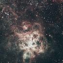 Tarantula Nebula,                                Paul Wilcox (UniversalVoyeur)