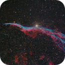 NGC 6960 Western Veil Nebula (the Witch's Broom),                                Shannon Calvert