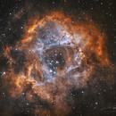 NGC 2244   Rosette Nebula,                                RichardBoudreau