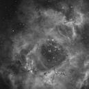 Rosette NGC2239 Ha,                                Jocelyn Podmilsak
