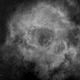 Rosette Nebula in H-alpha,                                Dick Newell