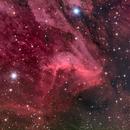Pelican Nebula (RGB),                                Miles Zhou