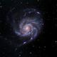 M101, The Pinwheel Galaxy,                                Dick Newell