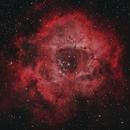 A Bicolor Rose(tte),                                Ron