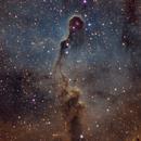 IC1396 - Elephant Trunk Nebula,                                Tom