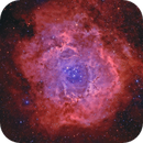 X-treme Rosette Nebula,                                Arno Rottal