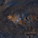 Cone Nebula and the Christmas Tree Cluster (NGC 2264),                                Sasho Panov