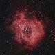 Rosette Nebula,                                Steve Eltz