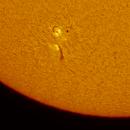 Active Region 12765 in Ha,                                Chappel Astro